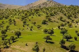 دشت های استان ایلام آموت بار